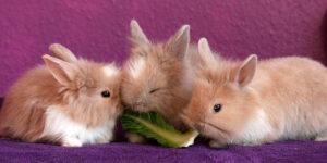 El conejo, mascota popular en Costa Rica
