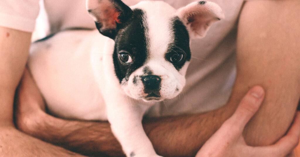 La sarna de perros es contagiosa