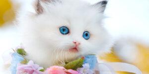 Los gatos adorables son excelentes amigos para las personas