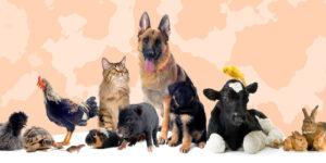 Día Mundial de los Animales el 4 de octubre