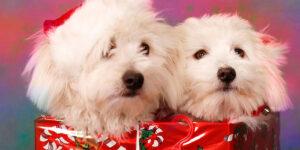 Quiero una mascota para Navidad