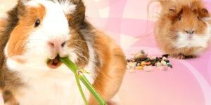 Cómo cuidar los dientes del cuilo