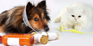 Qué son los medicamentos veterinarios