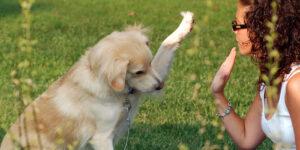 Costarricenses entre los principales amantes de perros en el mundo