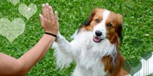 Cómo cuidar las patas de tu mascota durante la pandemia de Covid-19