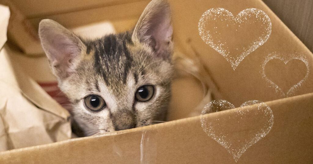 Por qué a los gatos les gustan las cajas