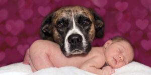 Como preparar a las mascotas para la llegada del bebé