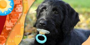 Cinco accidentes domésticos más comunes en las mascotas