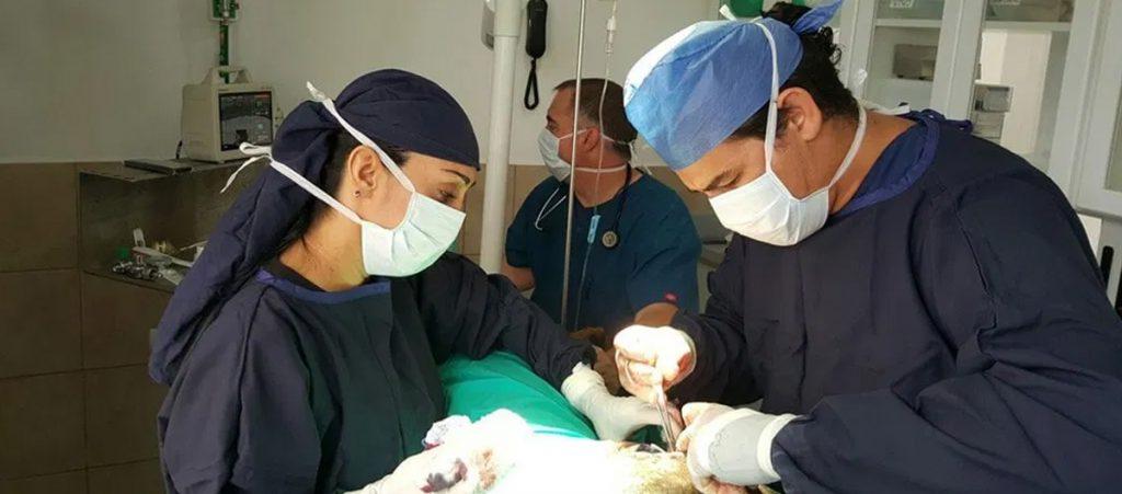 Cirugías en Hospital Veterinario Agromédica
