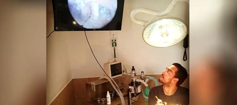 Endoscopía Veterinaria en Hospital Veterinario Agromédica
