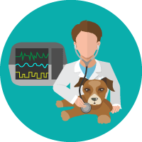 Monitoreo Multiparámetros en Hospital Veterinario Agromédica