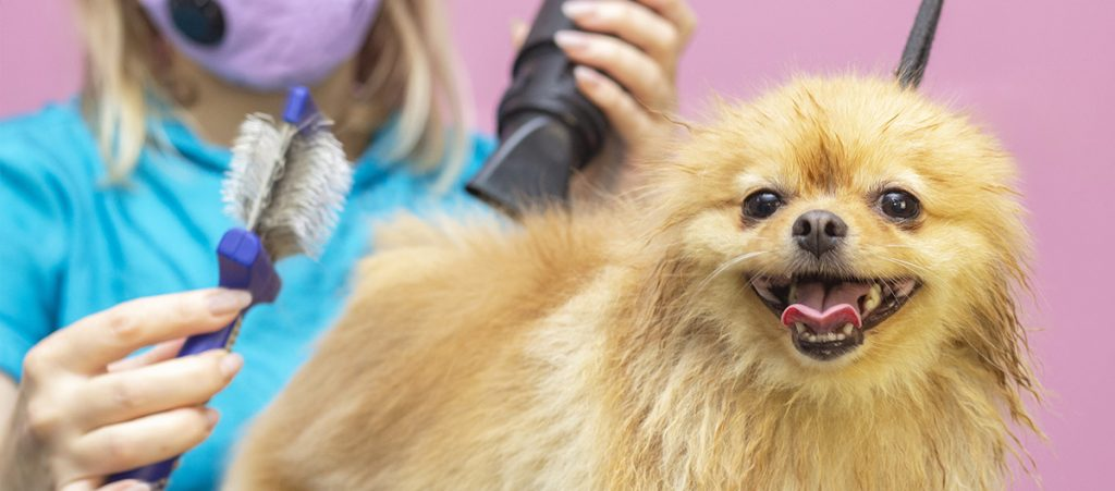 Peluquería, Pet Grooming en Hospital Veterinario Agromédica
