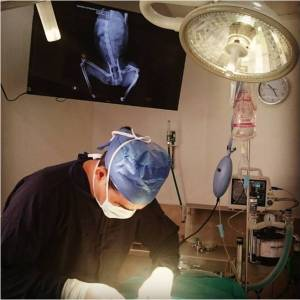 Médico Veterinario Ronald Rojas O