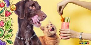 El veganismo en perros y gatos