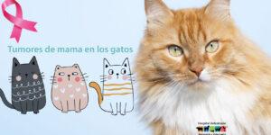 Cáncer de mamas en gatos