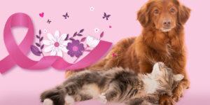 Prevención del cáncer de mamas en perros y gatos