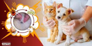 Garrapatas en perros y gatos, lo que necesitas saber