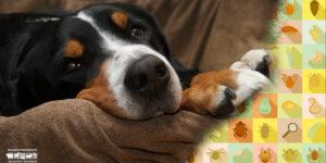 Hemoparásitos en perros y sus riesgos