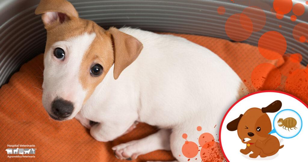 La ehrlichia y cómo afecta a tu perro