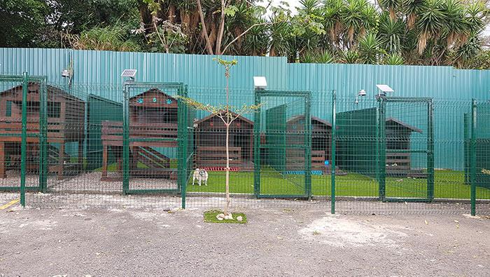 Hotel Para Mascotas Costa Rica
