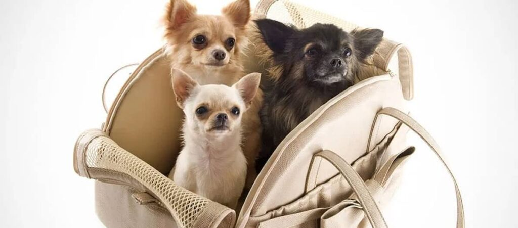 Viajar con mascotas, Volar con mascotas, Viaje con  mascotas