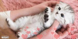 Cuáles son los gatos más cariñosos