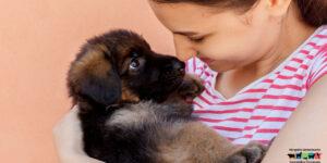 Un nuevo cachorro de perro en casa