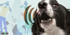 ¿Por qué aúllan los perros?