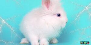 Enfermedades más comunes de los conejos mascotas