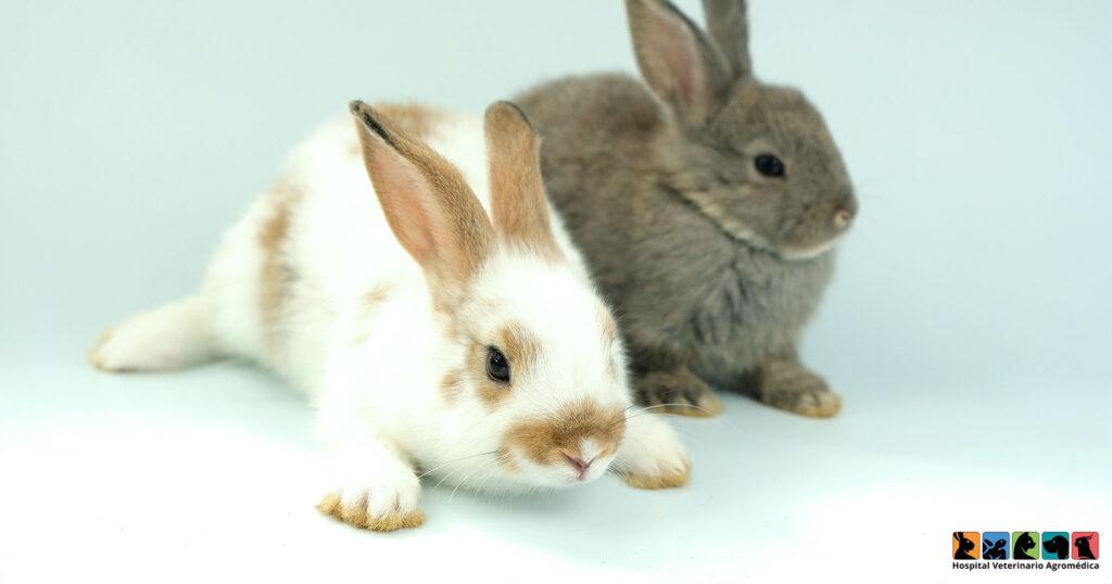 ¿Cuánto crecen los conejos?