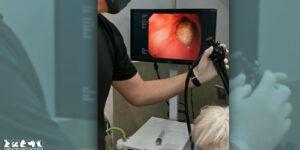 Endoscopia veterinaria
