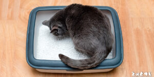 Mi gato no orina ¿es una emergencia?
