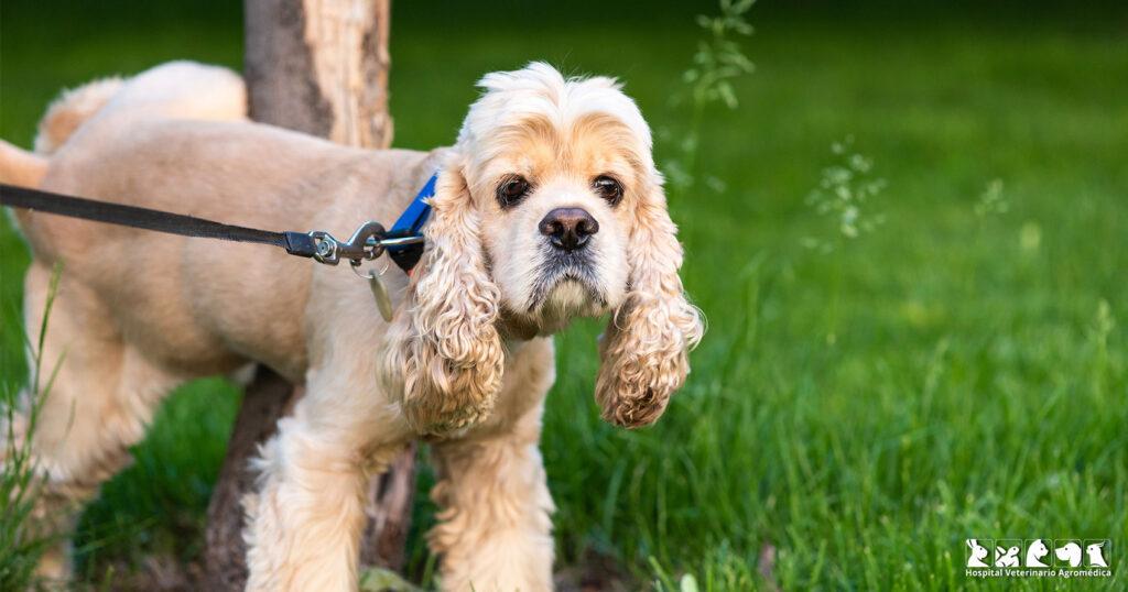 ¿Por qué mi perro no orina?